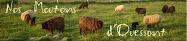Mouton d'Ouessant Forum Mouton d'Ouessant