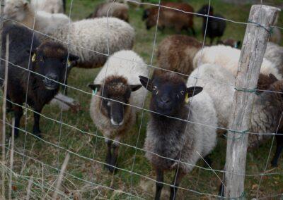 The Great Divide : Splitting the Flock