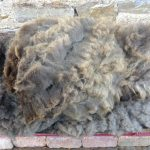 Sheep to Sweater Sunday n° 164 : Shearing is Done …