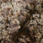 Sheep to Sweater Sunday n° 177 : Shearing 2016