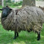 Sheep to Sweater Sunday n° 192 : Let's get to Work !