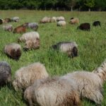 A New Pasture With an Abondance of Grass …